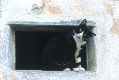 イタリア猫の日曜日 風媒社 最安値価格: 永井jfnラのブログ